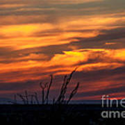 Ocotillo Sunset Art Print by Robert Bales