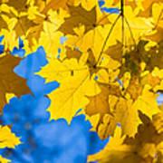 October Blues 8 - Square Art Print