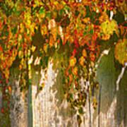 October Colors Art Print
