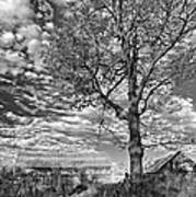 October Evening Monochrome Art Print
