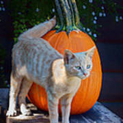 October Kitten #1 Art Print