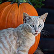 October Kitten #3 Art Print
