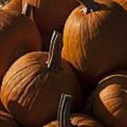 October Pumpkins Art Print