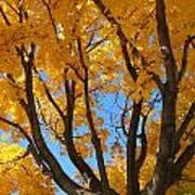 October Sky 1 Art Print