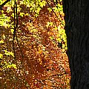 October Tree Art Print