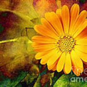 October Zinnia Art Print
