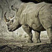 Odd-toed Rhino Art Print