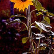 Ode To Sunflowers Art Print