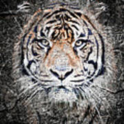 Of Tigers And Stone Art Print