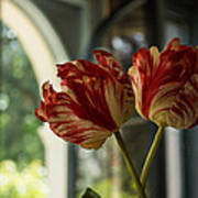 Of Tulips And Windows Art Print