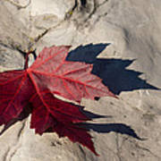 Oh Canada Maple Leaf Art Print