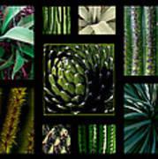 Oh My Cacti Art Print