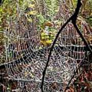 Oh What A Web We Weave Art Print
