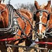 Ohio Draft Horses Art Print