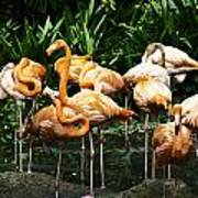 Oil Painting - Number Of Flamingos Inside The Jurong Bird Park Art Print