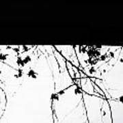 Oil Painting - Small Plant Branches Falling Over A Ledge - Horizontal Art Print