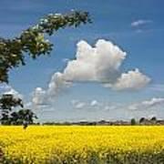 Oilseed Rape Field Against Blue Sky Art Print