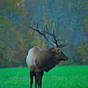 Okonoluftee Elk Art Print