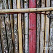 Old Bamboo Fence Art Print by Niphon Chanthana