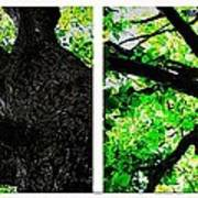 Old Barks Diptych - Deciduous Trees Art Print