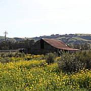Old Barn In Sonoma California 5d22234 Art Print