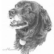 Old Black Lab Pencil Portrait Art Print