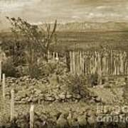 Old Boothill Cemetery Art Print