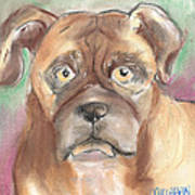 Old Boxer Art Print