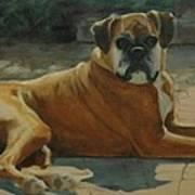 Old Boxer Art Print
