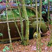 Old Car In The Woods Art Print