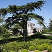 Old Cedar At Chateau Amboise Art Print