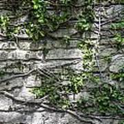 Old Coquina Wall Art Print