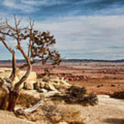 Old Desert Cypress Struggles To Survive Art Print