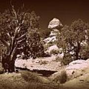 Old Desert Tree Number Three Art Print