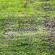 Old Green Grass Art Print