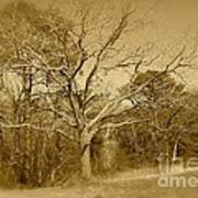 Old Haunted Tree In Sepia Art Print