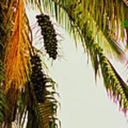 Old Palm Art Print
