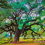 Old Plantation Oak Art Print
