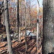 Old Rag Hiking Trail - 12126 Art Print