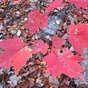 Old Rag Hiking Trail - 121260 Art Print