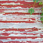 Old Red Barn With Peeling Paint And Vines Art Print