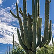 Old Saguaro At Ventana Canyon Art Print