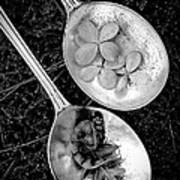 Old Silver Spoons Art Print