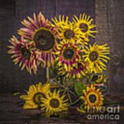 Old Sunflowers Art Print