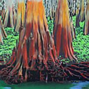 Old Swampy Art Print