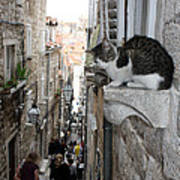 Old Town Alley Cat Art Print