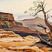 Old Tree At The Canyon Art Print