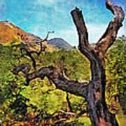 Old Tree Landscape Art Print