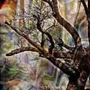 Old Tree Photoart Art Print
