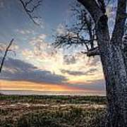 Old Tree Sunset Over Oyster Bay Art Print